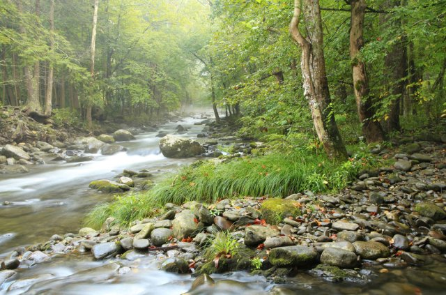 Little-River-in-the-Elkmont-area-of-the-Great-Smoky-Mountains-National-Park